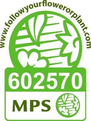 MPS_arendcactus